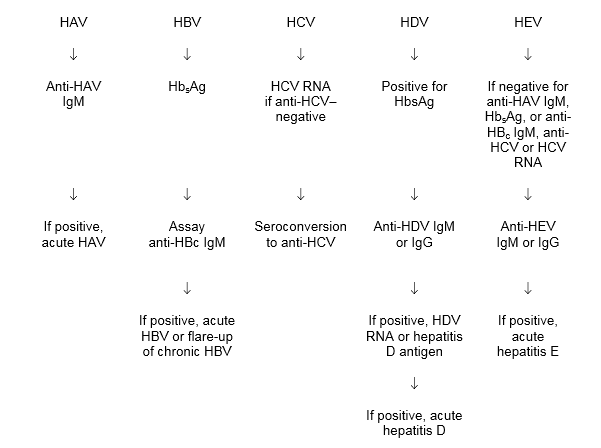 hepatitis e essay